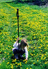 Grace In The Dandelions