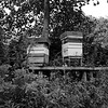 CH008436 Old Hall bee hives in mono