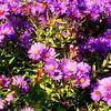 Fall Flowers in Denver Colorado 2