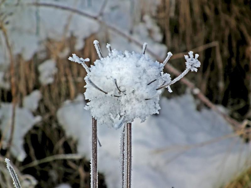 Snow scene, Springwell, Eighton Banks, Gateshead 08