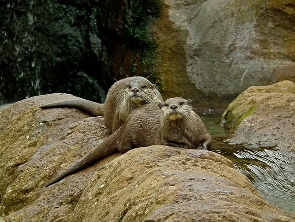 a otters 1