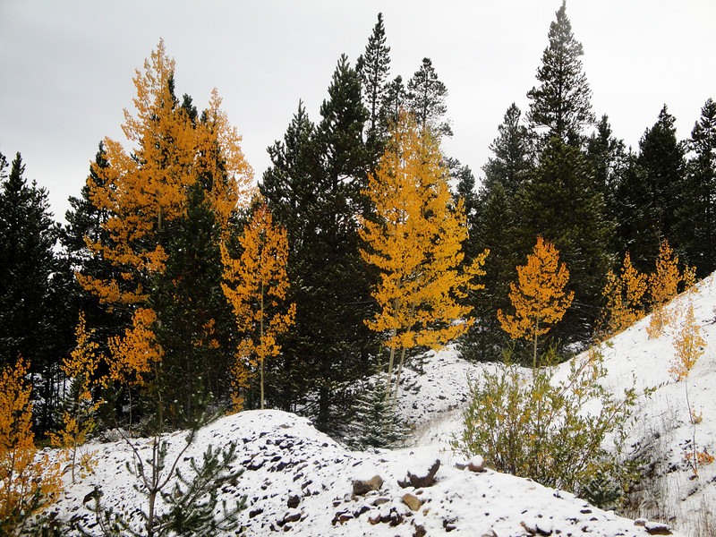 Aspen and First Snow