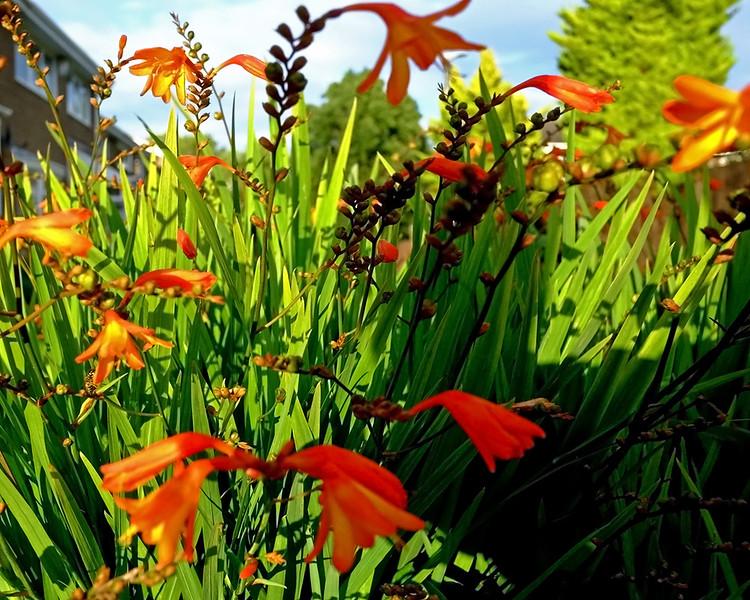 CH006018 Garden flowers Aug 18