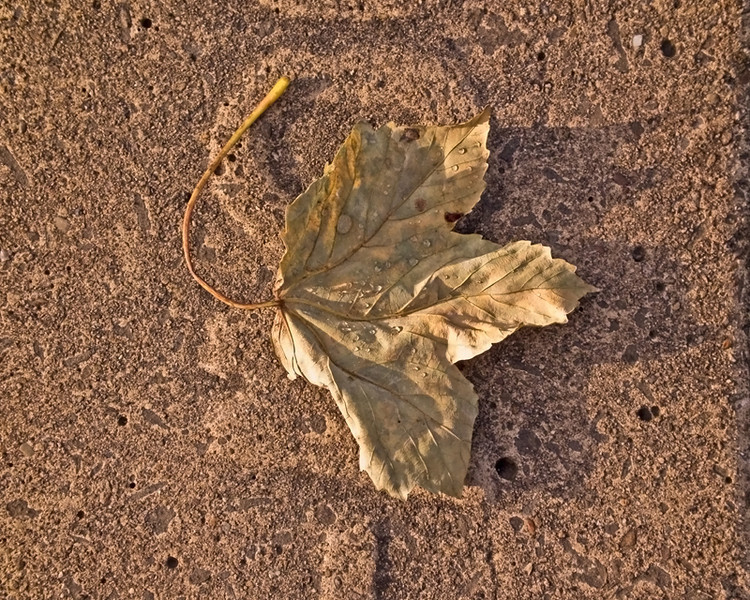 A wet dry leaf, first thing in the morning.