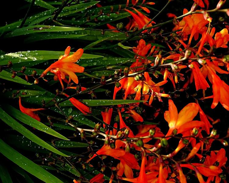 CH006015 Garden flowers Aug 18