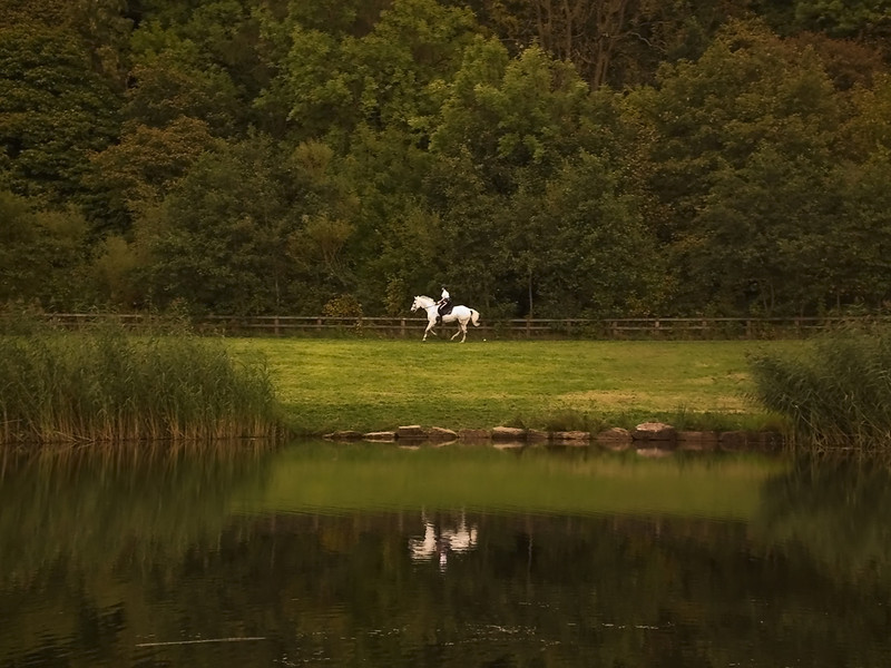 Thornley Woods horse and rider