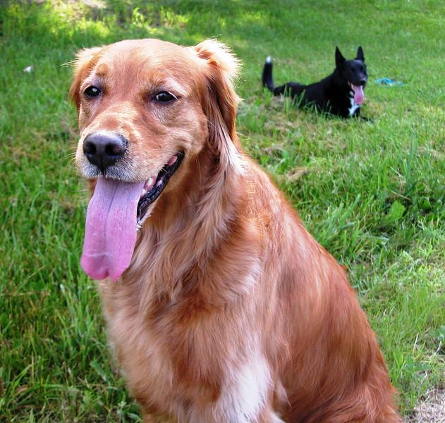 Bailey and Merle