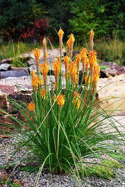 Betty Ford's Alpine Garden