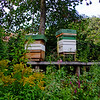 Bee hives at Washington Old Hall