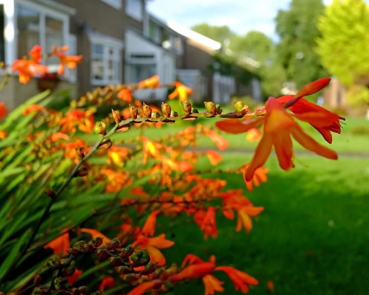 CH006020 Garden flowers Aug 18