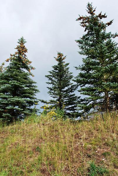 Three Trees Betty Ford's Alpine Garden
