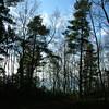 Simonside Woods, Rothbury