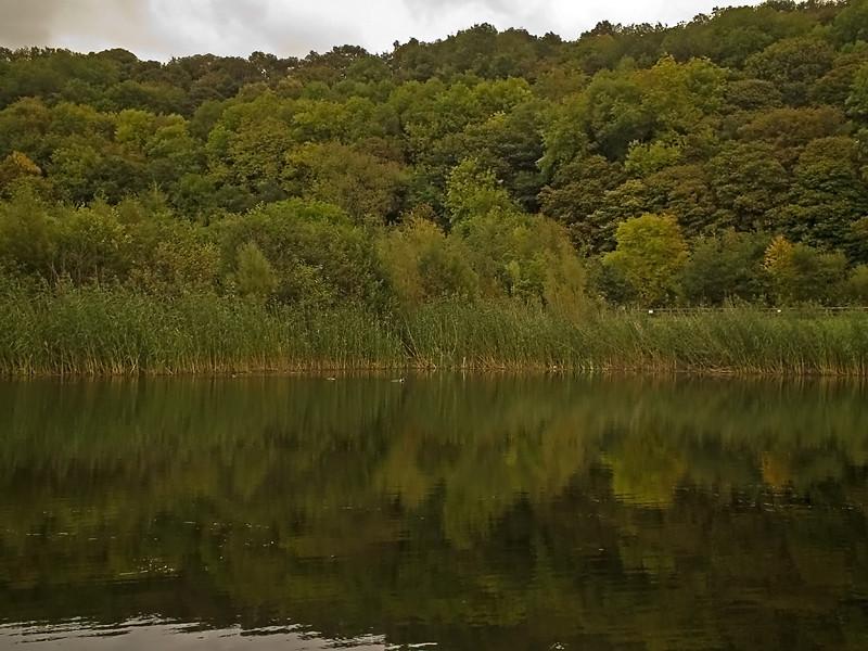 Thornley Woods 2
