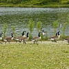 Herrington Park