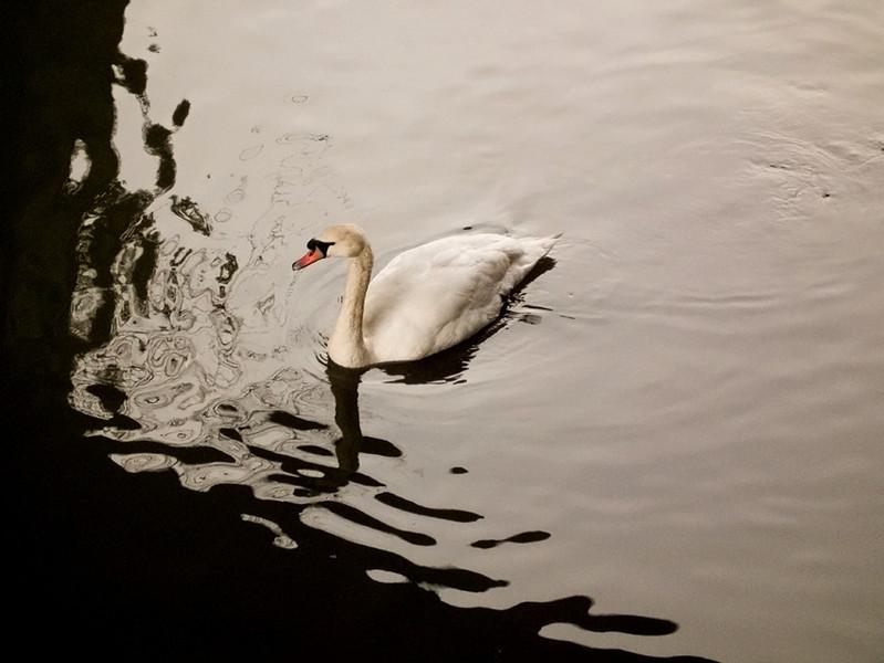 Swan Ouseburn, Newcastle