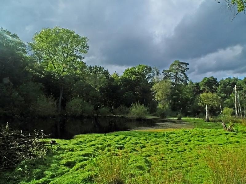 Guildford Ockham & Chatley Heath 01