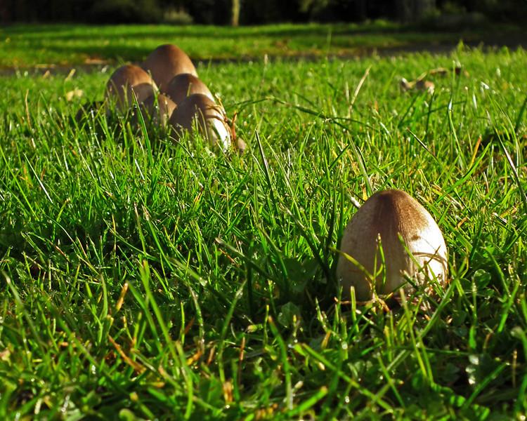 mushrooms in Washington (Oct 2012)