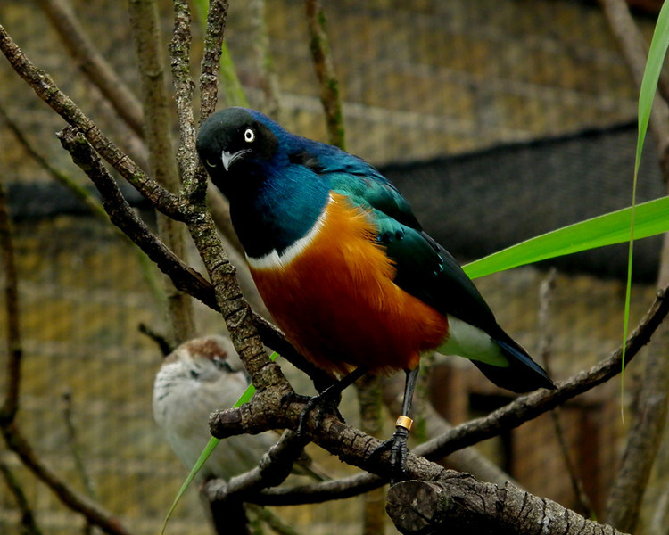 a multi-coloured bird 1