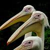 storks 3