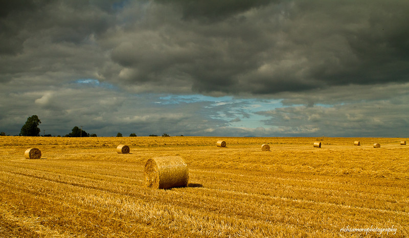 Harvest field,co. carlow