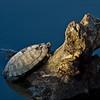 Turtle on log post