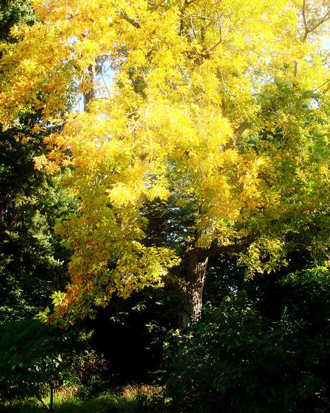 Fall Colors in Denver Colorado