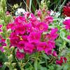 Flowers in Aspen