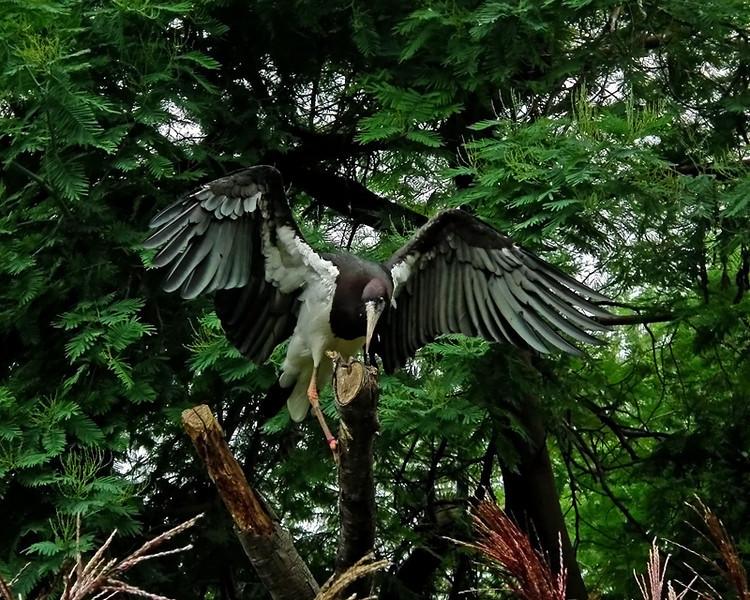 a london crane 2