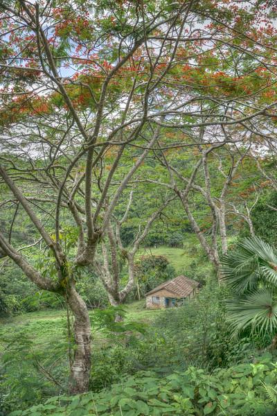 Cuba Rural