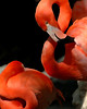 Flamingo staredown.