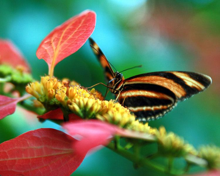 Houston butterfly center