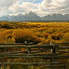Looking down the valley into the face of the majestic Teton's the golds of autumn stand out against the blue of the sky.