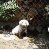 dirty dog 005-Johnè