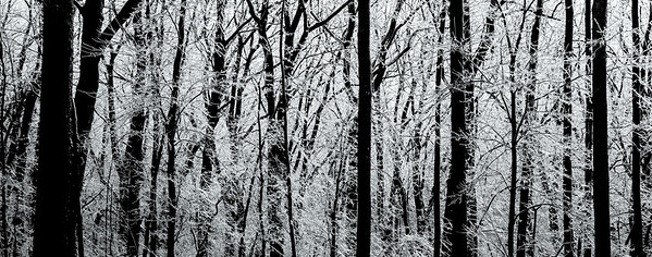 IN TO THE ICY WOODS