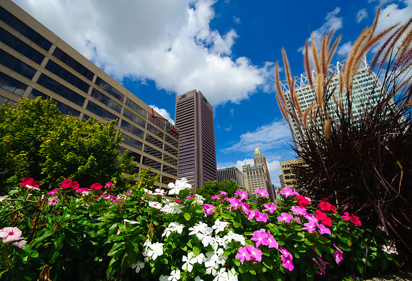 FLOWERS & TOWERS--Baltimore
