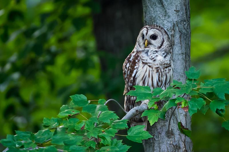 OWL quarter-profile