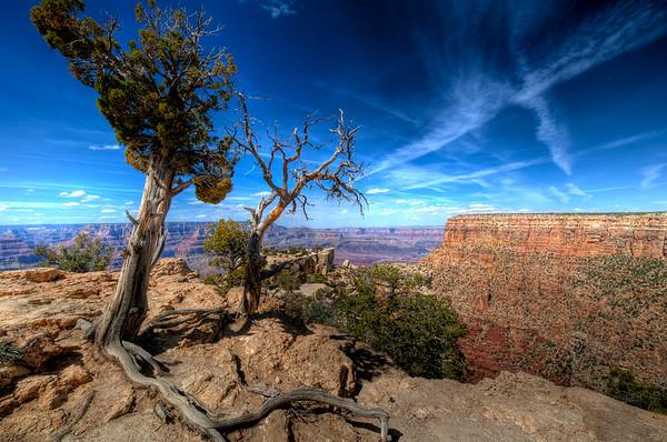 GRAND CANYON SKY TREE HDR
