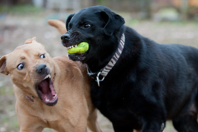 Daisy & Bailey -- SO CUTE!
