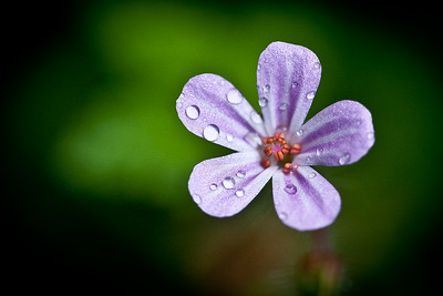 PURPLE DROPLETS