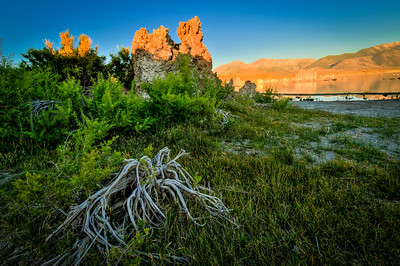 TUFAS & ROOTS, MONO LAKE, CA