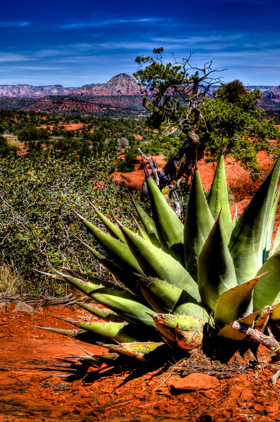 AGAVE-HDR
