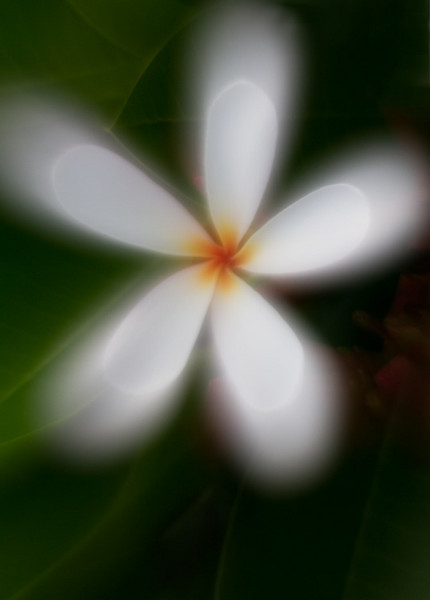 Improved version of blurred Plumeria incorporating Denies's suggestions and removing the extra bloom.
