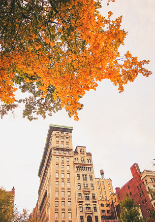 Autumn in Union Square