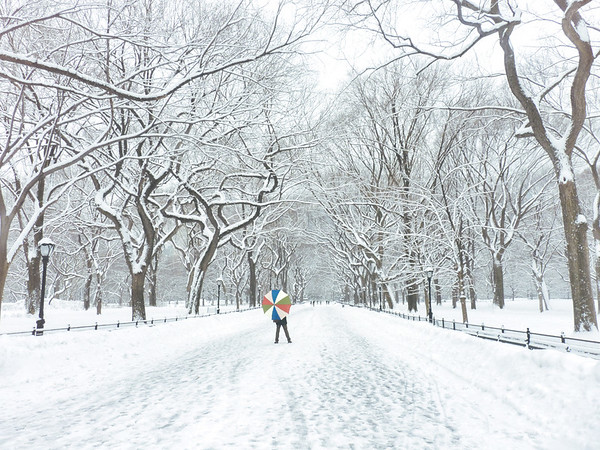 Central Park Winter - Under the Elm Trees - New York City
