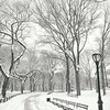 Central Park Winter - Snow in the Afternoon - New York City