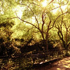 <h2>Kissed by the Sun - Summer - Central Park Conservatory Garden  - New York City</h2> - By Vivienne Gucwa  Kissed by the sun, the day lingers long into the night.  Earth devours every last bit of of light as trees sway with their graceful branches adorned by summer's heavy garlands.  And the glow of daylight's promises basks in its transient longevity.  ---