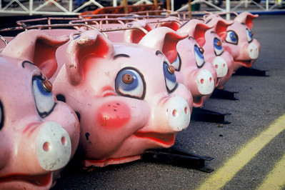 """""""Road Hogs""""  Eager pigs await their fate."""