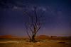 Nam 112 Dead Tree under the Milky by Moonlight, Sossusvlei, Namibia