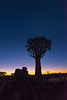 Nam 006 Quiver Tree Twilight, Namibia