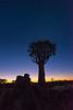 Nam 006 Quiver Tree Twilight, Namibia